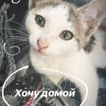 Котенок в добрые руки, Уфа